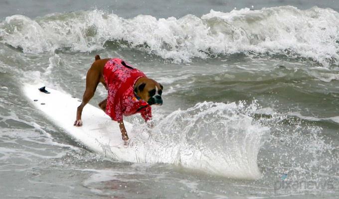 dogs3-680x400 (680x400, 116Kb)