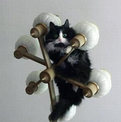 кот (412x415, 15Kb)