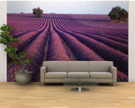 Lavender Field, Fragrant Flowers, Valensole, Provence, France Wall Mural.