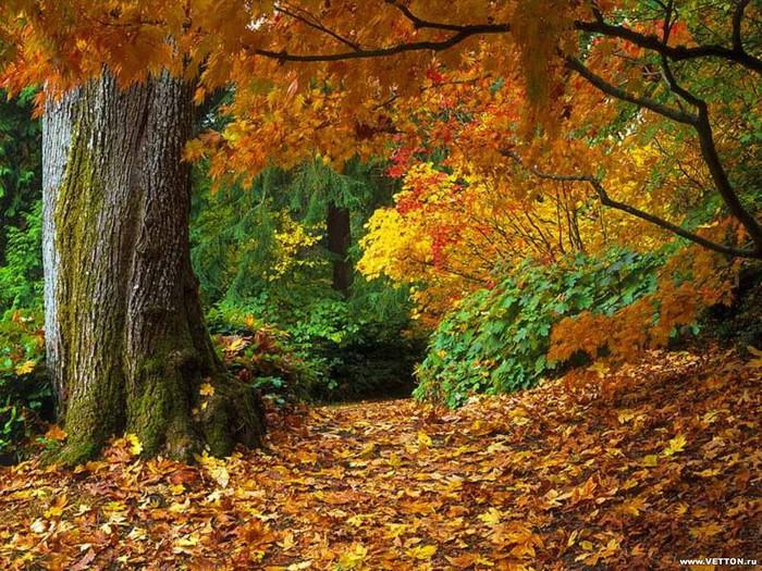 beautiful autumn (700x525, 185Kb)