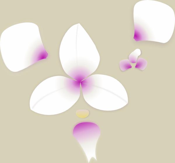 Орхідея-викройка.