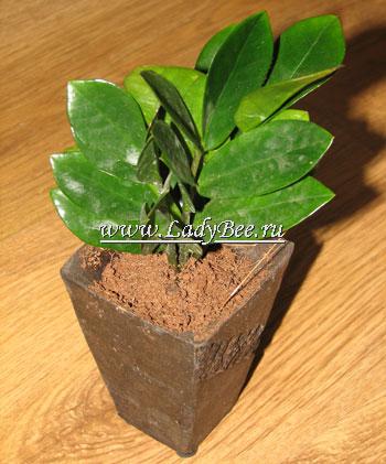 Комнатные растения финансового