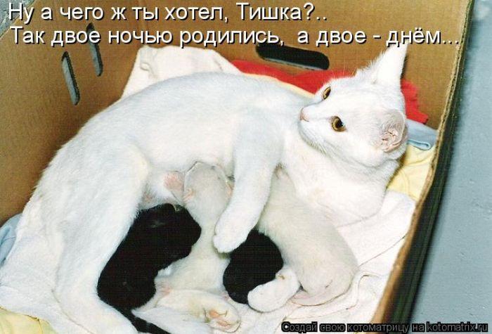Кошка с котёнком и кошка с котятами.