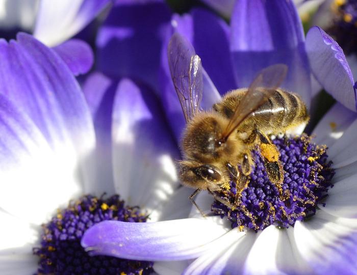 И снова о мёде и пчёлах