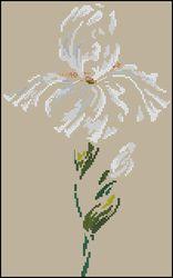 3937664_DMCArum_Iris (156x250, 6Kb)
