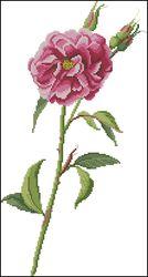 Схема на.  Цветы и растения. открывается в программе. сайте.  Для того чтобы скачать файл, необходимо.