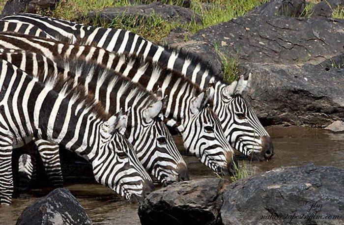 животные (27) (700x458, 109Kb)