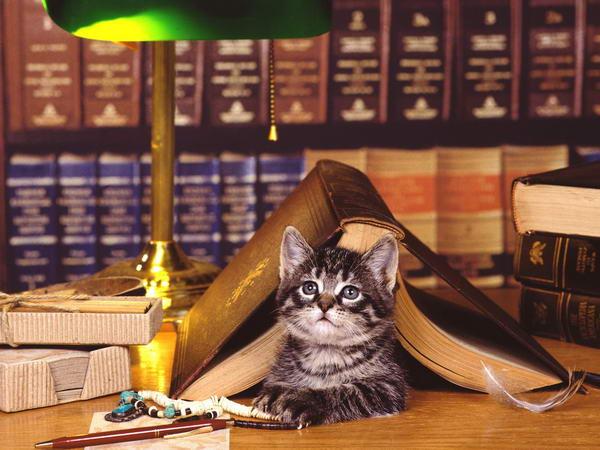 Один день из жизни кота. Кошачья поэзия
