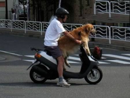3676705_a97916_walkpet_7bike (450x338, 20Kb)