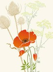������ 234-giant-poppy2-C13 (350x480, 30Kb)