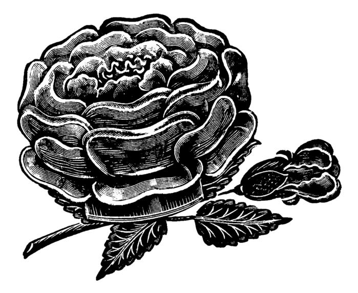 roses001 (700x572, 167Kb)