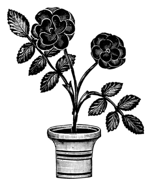 roses012 (570x700, 125Kb)