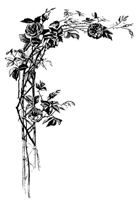 roses021 (478x700, 148Kb)