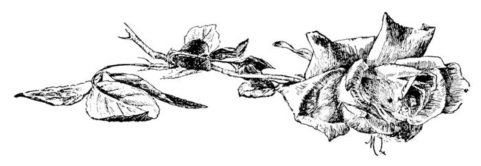 roses023 (700x242, 125Kb)