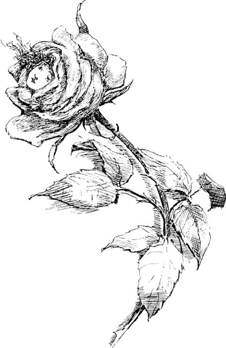roses030 (455x700, 212Kb)
