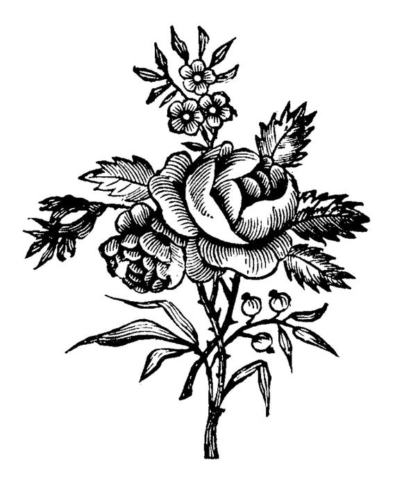 roses046 (579x700, 175Kb)