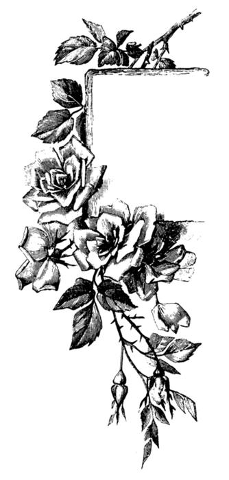 roses037 (334x700, 158Kb)