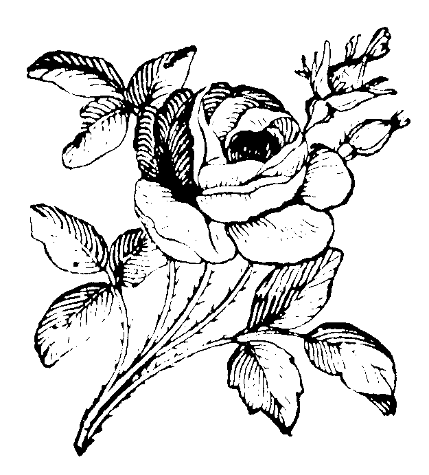 roses056 (625x691, 27Kb)