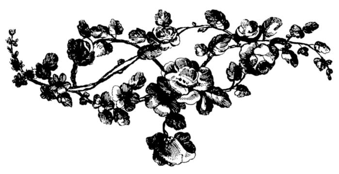 roses075 (700x360, 82Kb)