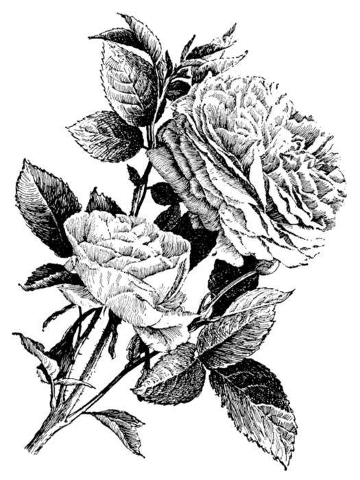 roses083 (525x700, 192Kb)