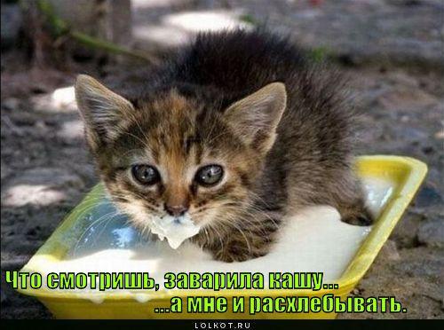 chto-smotrish_1315213862 (500x372, 47Kb)
