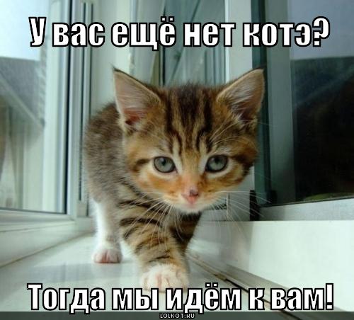 u-vas-net-kote_1314098657 (500x452, 149Kb)
