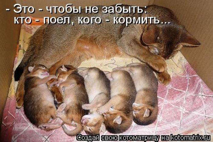 1316770437_kotomatritsa-3 (700x466, 73Kb)