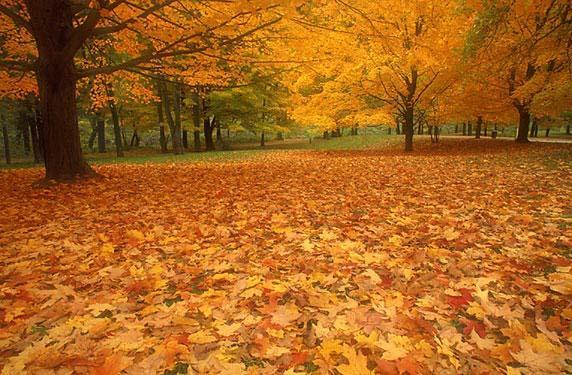 осень (572x375, 62Kb)