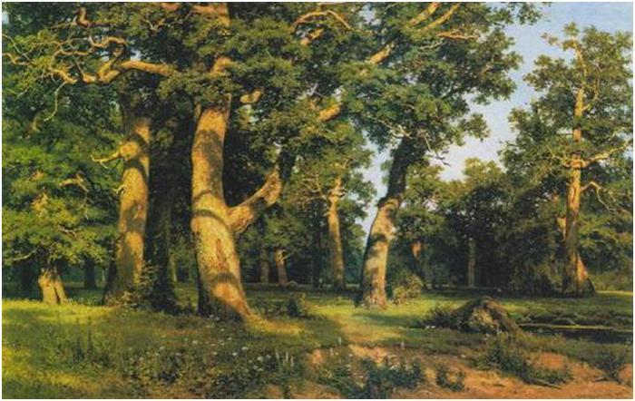 и широколиственных лесов и