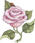 Превью Rose01 (479x576, 82Kb)