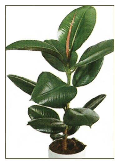 Декоративные лианы  виды и практические советы по