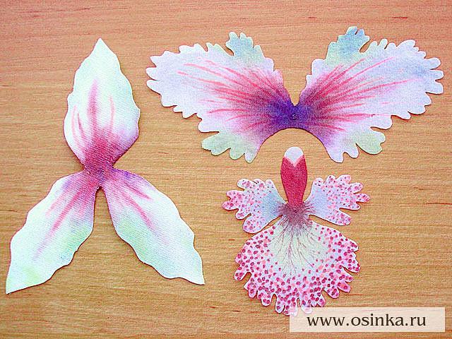 фотографиями орхидей в