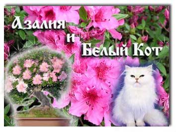4216969_azaliya_cat (355x265, 23Kb)