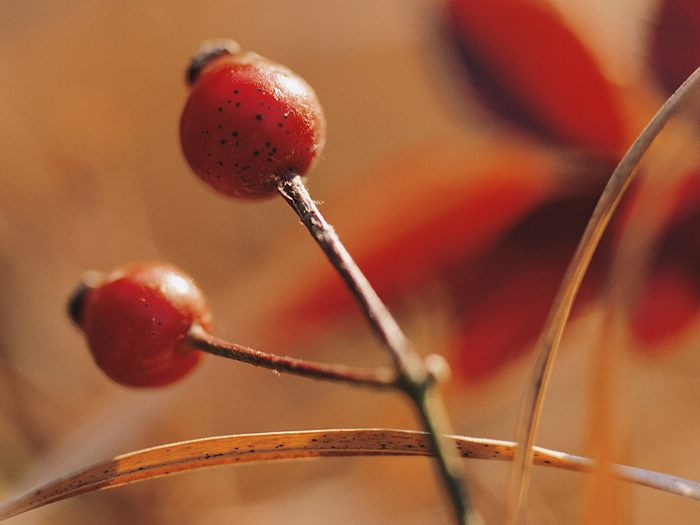 [wallcoo_com]_autumn_fruit_EA54247 (700x525, 36Kb)