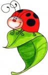 2094999_thumb_ladybug02 (96x150, 6Kb)
