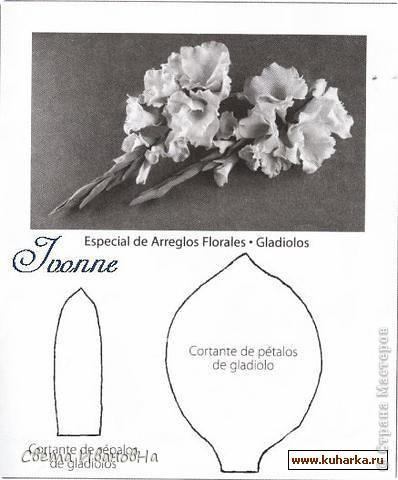 gladiolus7 (398x480, 39Kb)