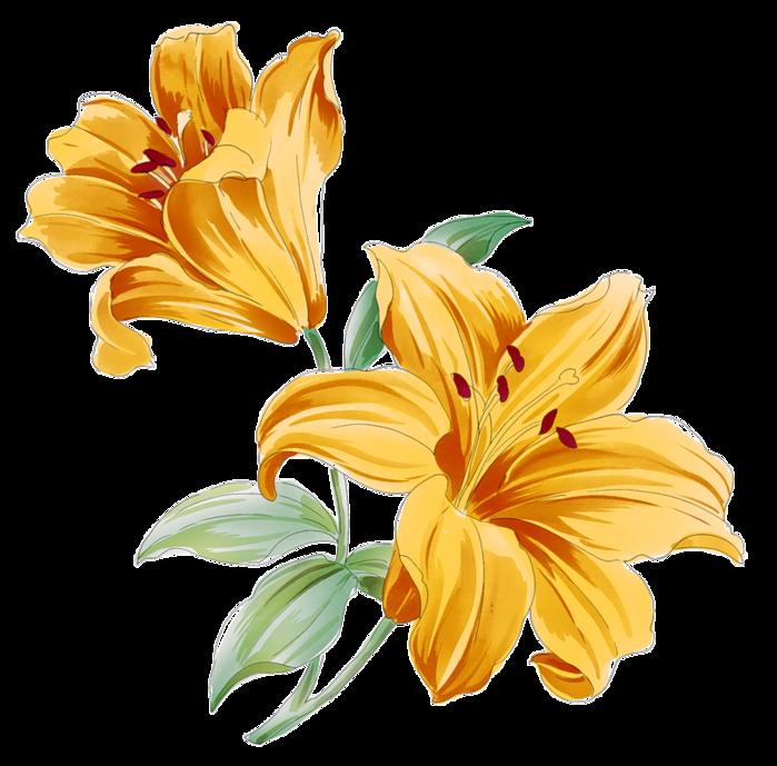 Картинки цветов лилии карандашом 3