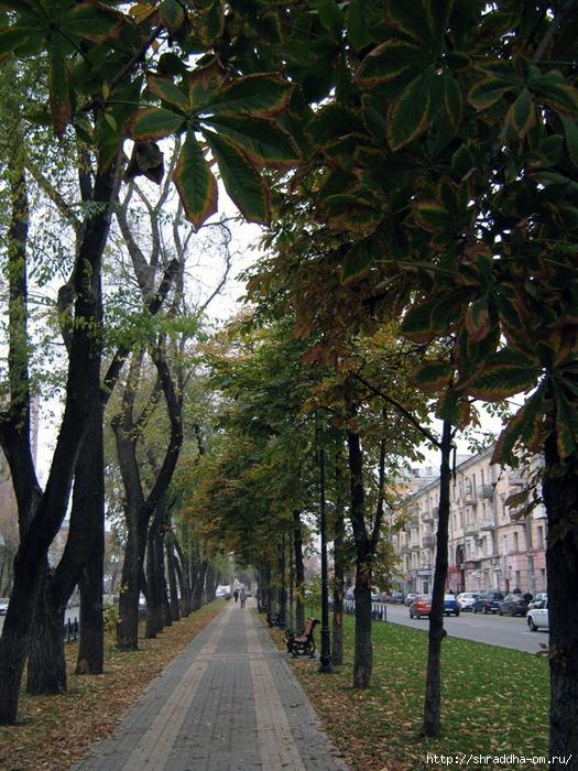 аллея улицы Кольцовской, Воронеж (525x700, 375Kb)