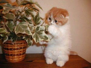 cat_eating_plant-300x225 (300x225, 21Kb)