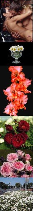 цветок-ромашка (111x700, 27Kb)