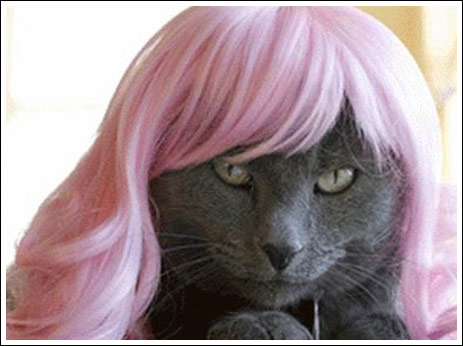 кошка в парике (463x346, 34Kb)