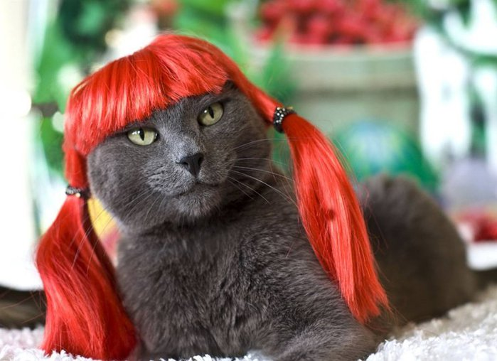 коты и парики (699x508, 63Kb)