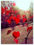 Превью Это любовь (32) (530x696, 388Kb)