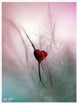 Превью Это любовь (46) (528x700, 199Kb)