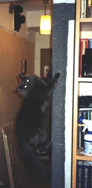 следующий слой кот подрал входную мягкую дверь мокром белье было