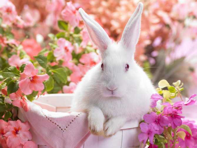 animals_flowers%2015 (670x503, 90Kb)