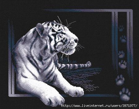 3971977_J277_Belii_tigr (450x354, 123Kb)