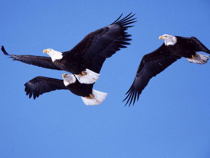 Птицы животные фото птицы очередная