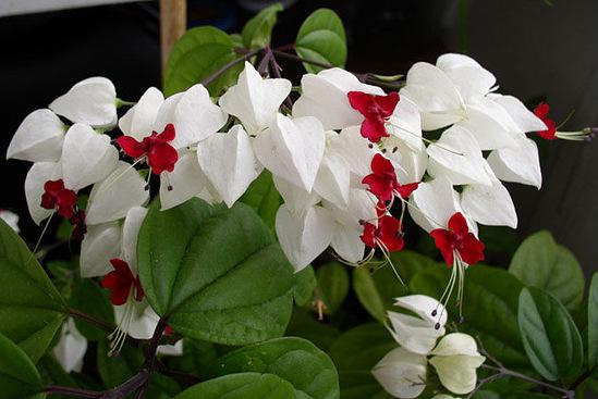 Цветущие комнатные растения красота