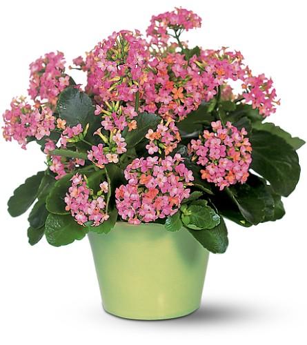 Цветы фото метки цветы фото комнатные